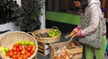 Feria de productos ecol gicos vida saludable y desarrollo - Luz de vida productos ecologicos ...